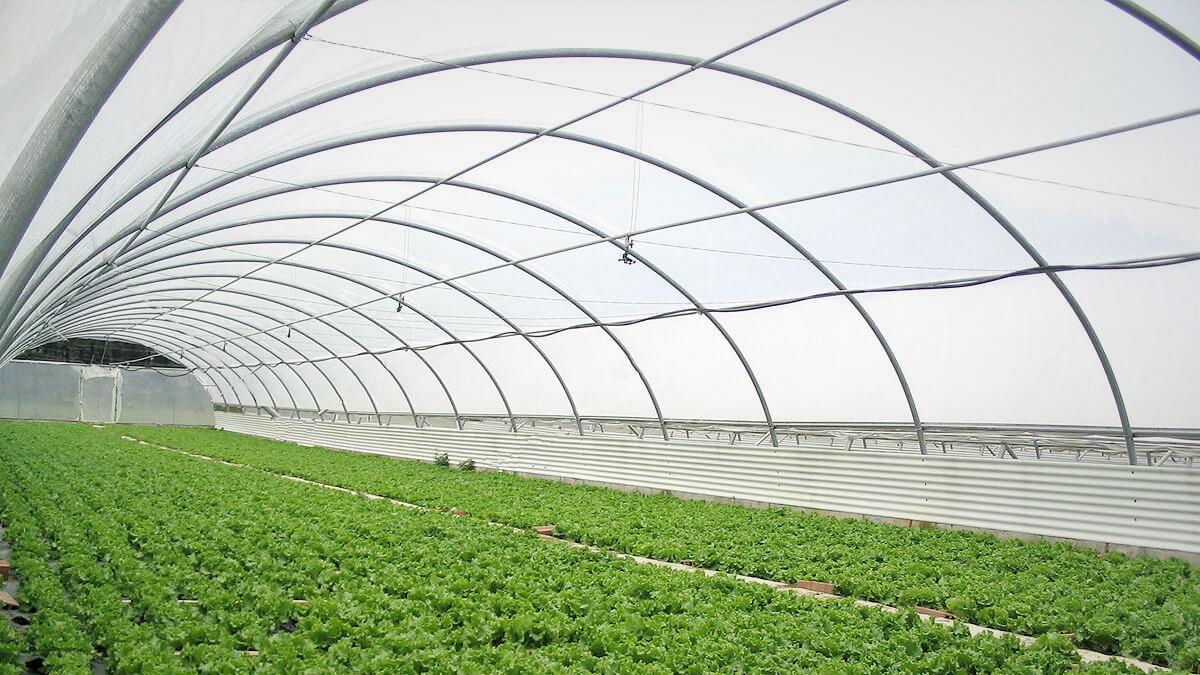 Panorama Agropecuario, campoads